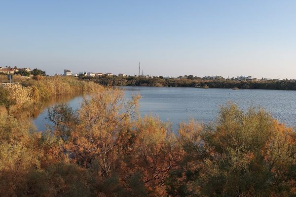 Oroklini lake, Larnaca (2)